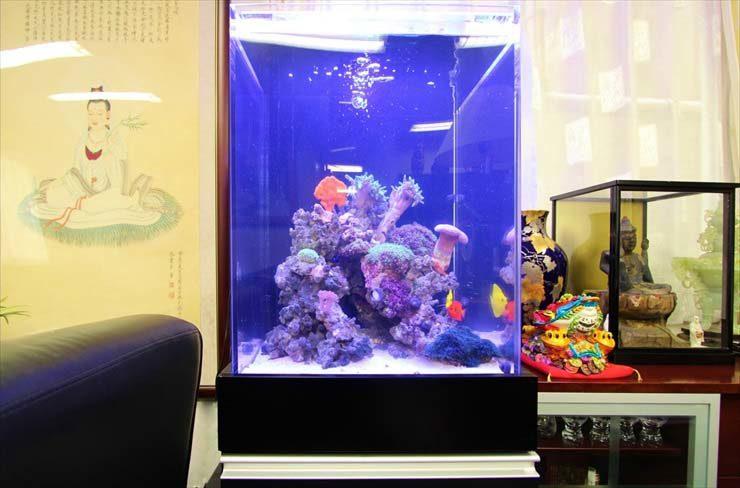 千代田区 企業様  45cm海水魚水槽  設置事例 メイン画像