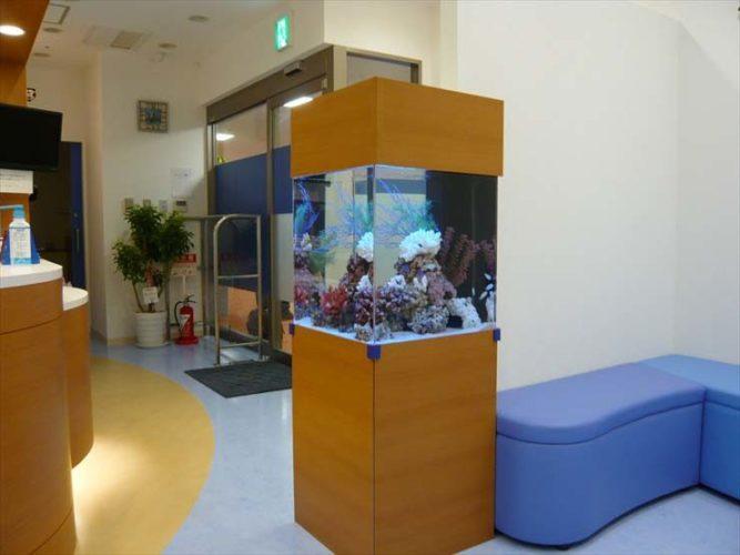 神奈川県横浜市 海のこどもクリニック様  50cm海水魚水槽  設置事例 メイン画像