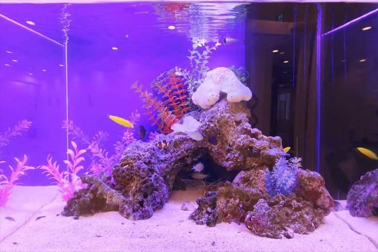 新宿  サロン様  60cm海水魚水槽  設置事例 メイン画像