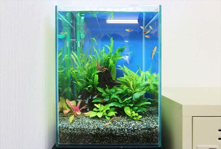 東池袋  企業様  30cm淡水魚水槽  設置事例 メイン画像