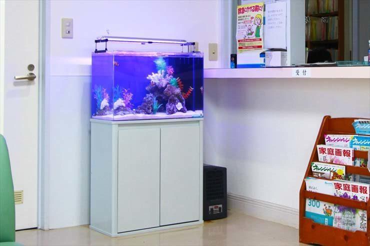 中野区 病院の待合室に設置 カクレクマノミの入る華やかな水槽 メイン画像