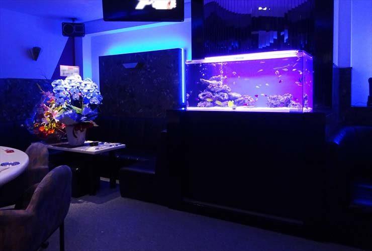 飲食店の海水魚水槽