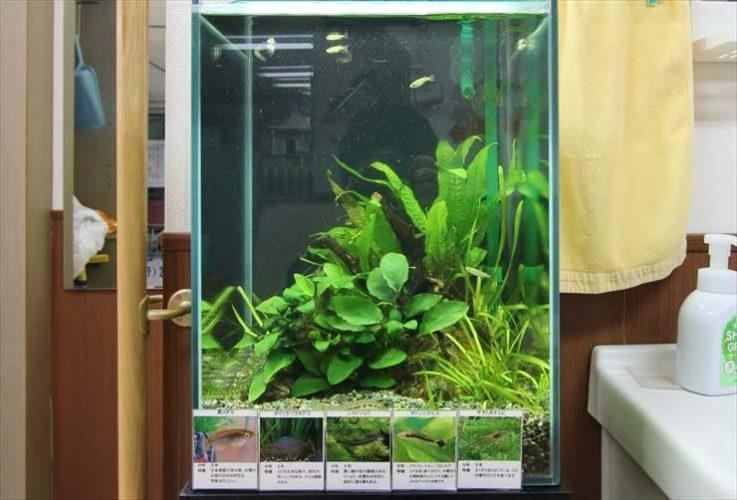 神奈川県川崎市  介護施設  30cm淡水魚水槽  設置事例 メイン画像