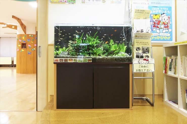 葛飾区  保育園様  90cm淡水魚水槽  設置事例 水槽画像2