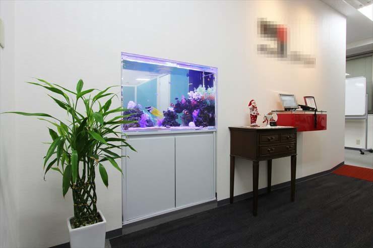 港区  企業様  90cm海水魚水槽  リニューアル事例 メイン画像