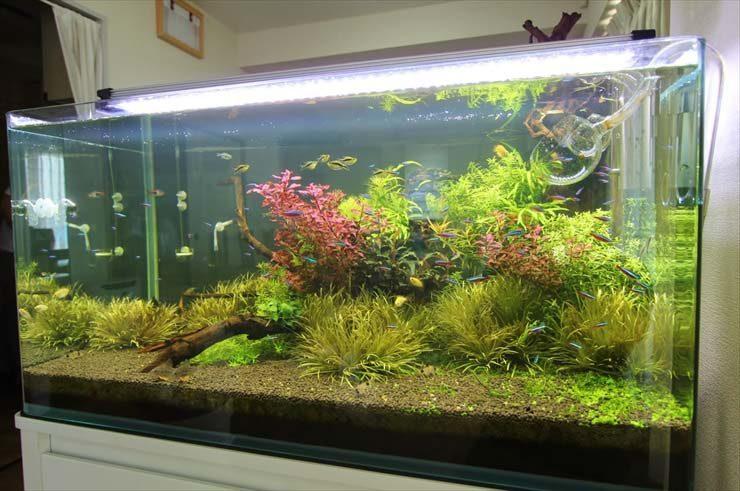 神奈川県横浜市  企業様  90cm淡水魚水槽  設置事例 メイン画像