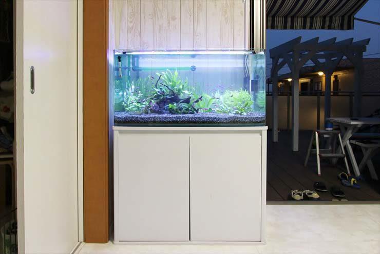 東京アクアガーデンのコケ対策!淡水魚水槽のコケ掃除事例