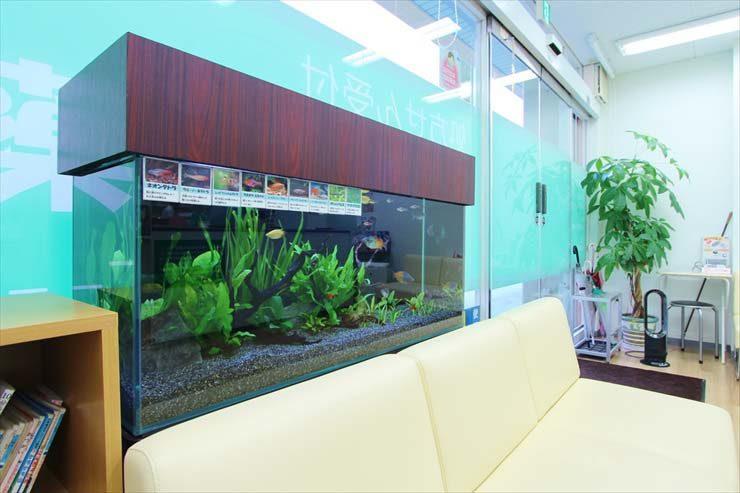墨田区  薬局様  90cm淡水魚水槽  設置事例 水槽画像1