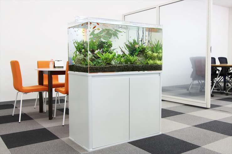 企業様  90cm淡水魚水槽  設置事例 メイン画像