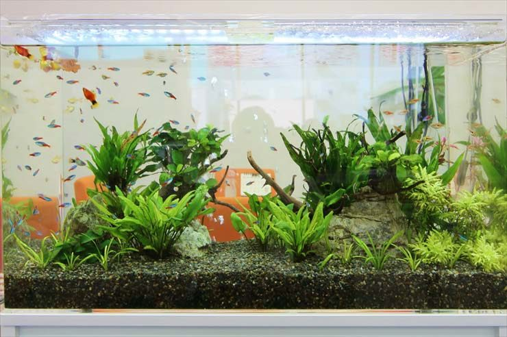 企業様  90cm淡水魚水槽  設置事例 水槽画像2