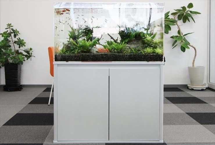 企業様  90cm淡水魚水槽  設置事例 水槽画像3