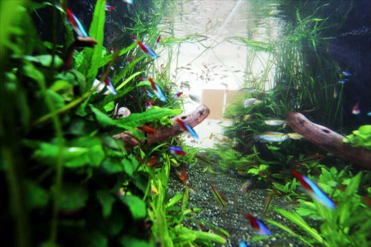 立川市  住宅展示場様  150cm淡水魚水槽  設置事例 メイン画像