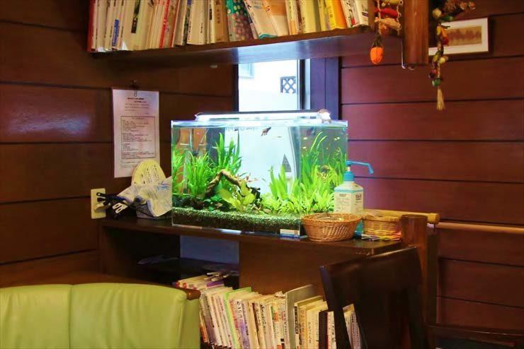 神奈川県横浜市  病院様  60cm淡水魚水槽  設置事例 メイン画像