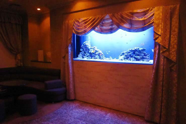 飲食店様  200cm海水魚水槽  設置事例 メイン画像