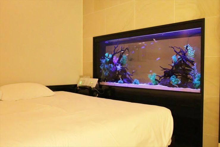 文京区  ホテル  180cm淡水魚水槽  設置事例 メイン画像