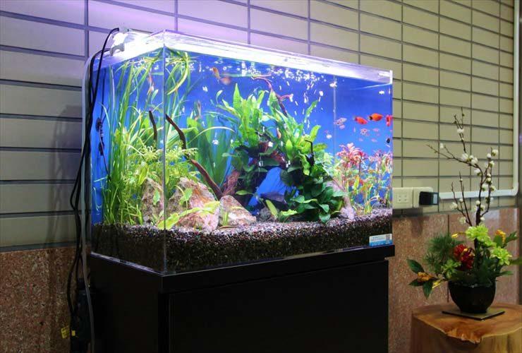 マンション  エントランス  60cm淡水魚水槽  設置事例 メイン画像