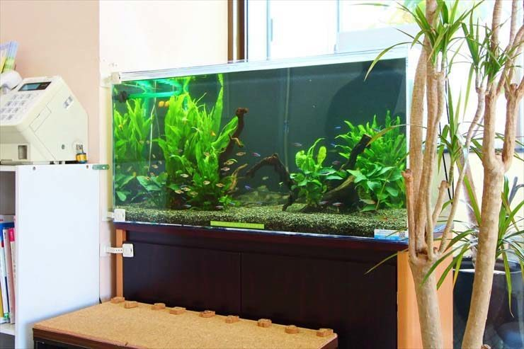 神奈川県横浜市  皮膚科  90cm淡水魚水槽  設置事例 メイン画像
