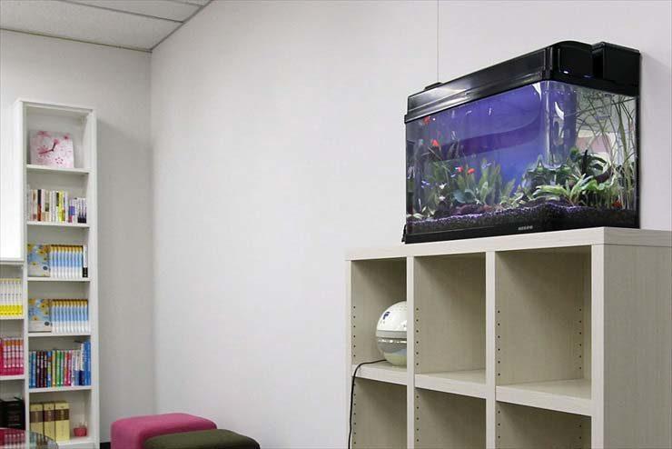 大田区  企業  60cm淡水魚水槽  設置事例 メイン画像