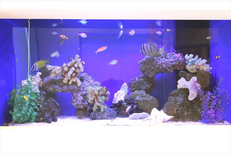 サロン 受付 90cm海水魚水槽 設置事例 メイン画像