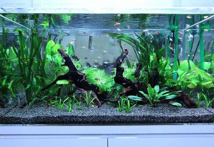 企業 エントランス 90cm淡水魚水槽 設置事例 メイン画像