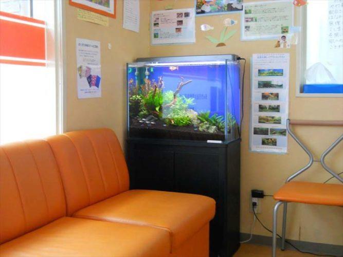 あゆみ薬局様  60cm淡水魚水槽  設置事例 メイン画像