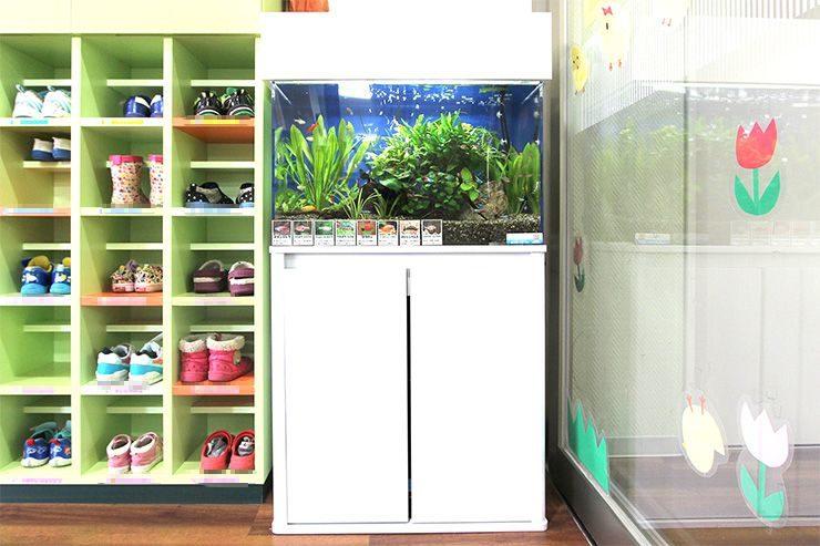 葛飾区  保育園  60cm淡水魚水槽  設置事例 メイン画像