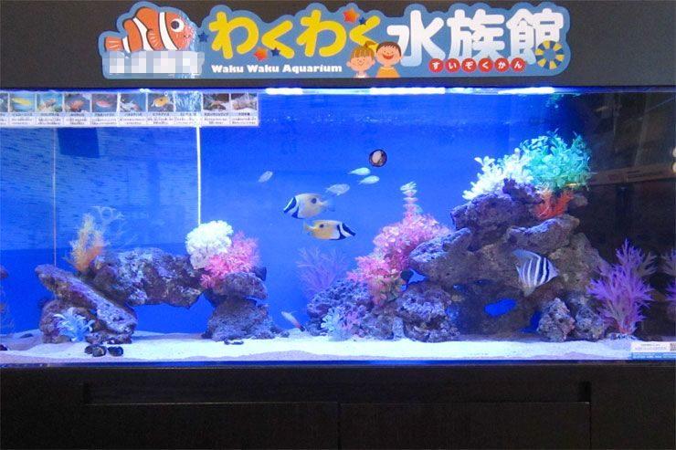 飲食店  待合スペース  120cm海水魚水槽  レンタル事例 メイン画像