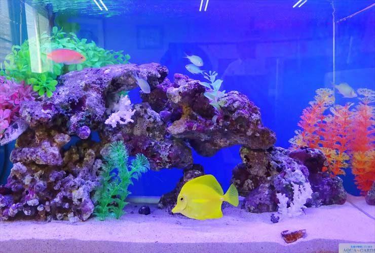 オフィス事務所  60cm海水魚水槽  設置事例 メイン画像
