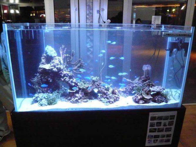 サンゴの日 沖縄自然体験館様  水槽設置事例 メイン画像