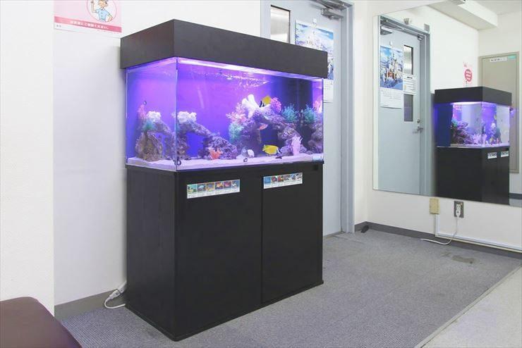 横浜市  内科皮膚科クリニック  90cm海水魚水槽  設置事例 メイン画像