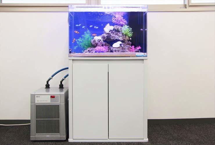 新宿区 オフィス内  60cm海水魚水槽  設置 水槽レンタル事例 メイン画像