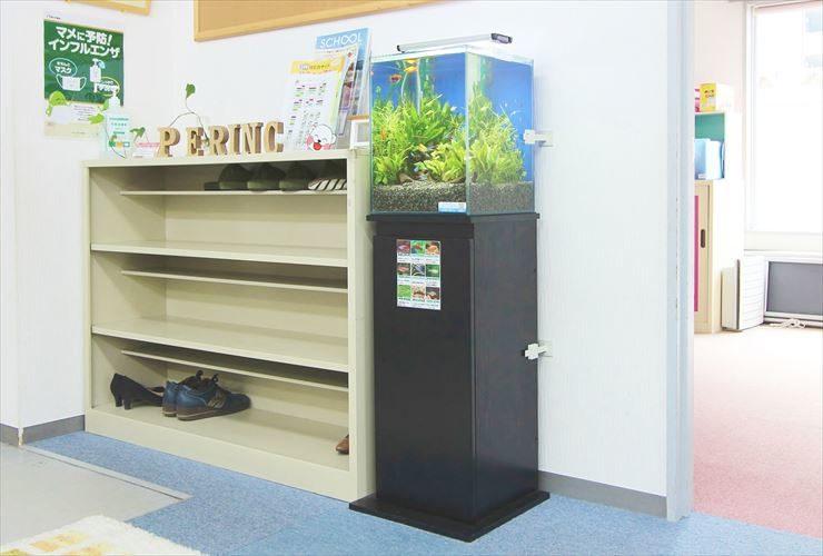 多摩市  教育施設  30cm淡水魚水槽  設置事例 メイン画像