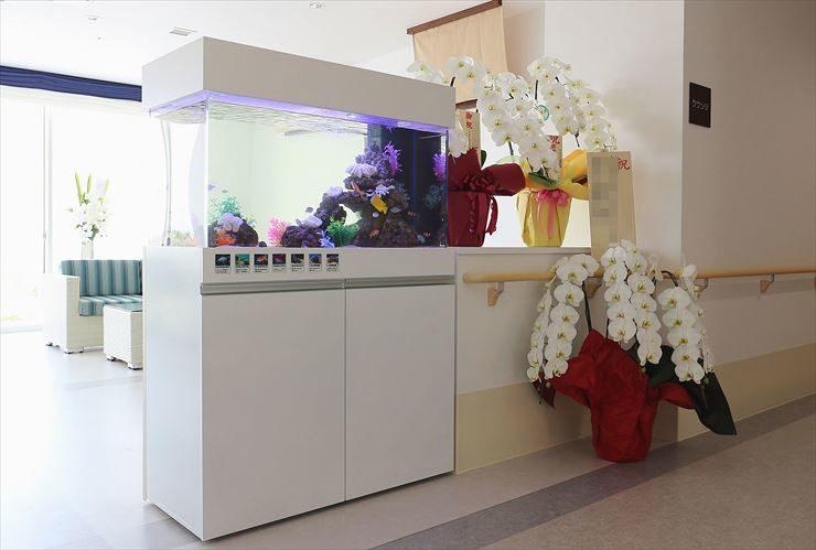 アシステッドリビング湘南佐島様  90cm海水魚水槽  設置事例 メイン画像