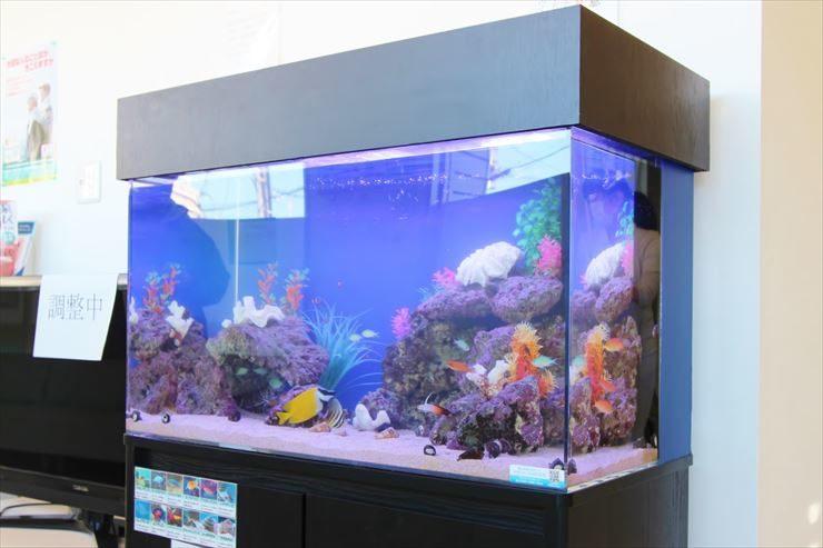 横浜市  診療所  待合スペース  90cm海水魚水槽  設置事例 メイン画像