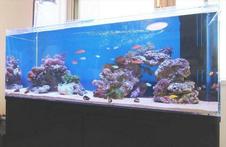 個人宅  リビング  120cm海水魚水槽  設置事例 メイン画像