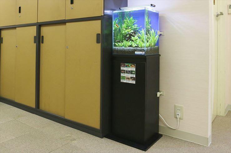 世田谷区  教育施設  30cm淡水魚水槽  設置事例 メイン画像