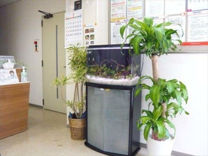 東京都八王子 クリーン薬局様 60cm淡水魚水槽  設置事例 メイン画像