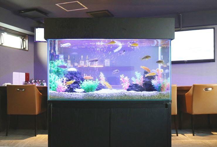 台東区  飲食店  90cm淡水魚水槽  設置事例 メイン画像