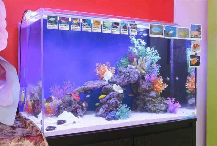東京都立川市  保育園様  90cm海水魚水槽  設置事例 メイン画像