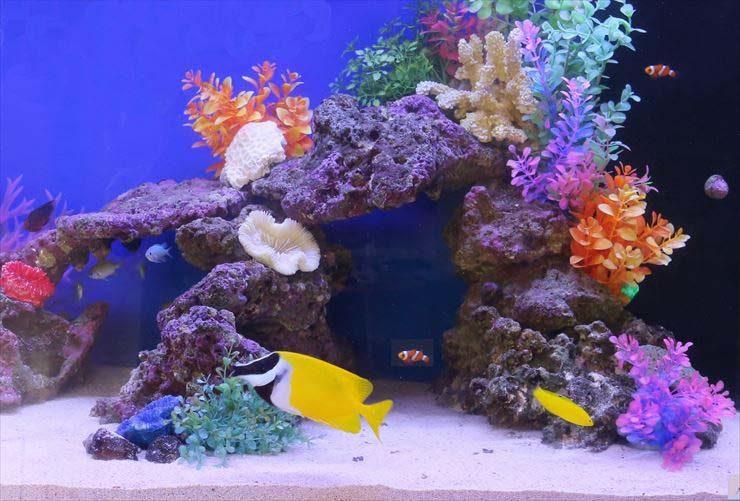 東京都立川市  保育園様  90cm海水魚水槽  設置事例 水槽画像2