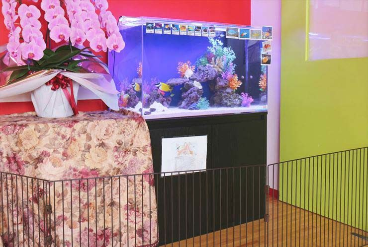 東京都立川市  保育園様  90cm海水魚水槽  設置事例 水槽画像3