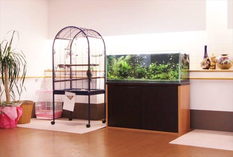 千葉県八街市  老人ホーム  120cm淡水魚水槽  設置事例 メイン画像