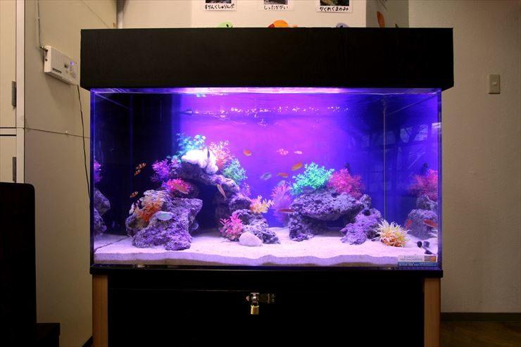 東京都北区  幼稚園  ホール  90cm海水魚水槽  設置事例 メイン画像