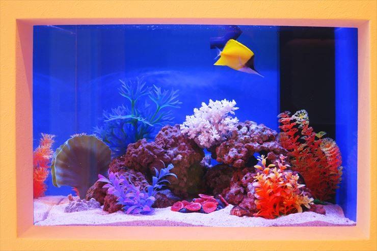 美容サロン  受付  60cm海水魚水槽  設置事例 メイン画像