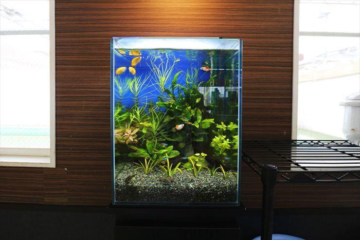 立川市  保育園  30cm淡水魚水槽  設置事例 メイン画像