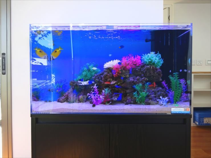 愛知県岡崎市 薬局  90cm海水魚水槽 設置事例 水槽画像1