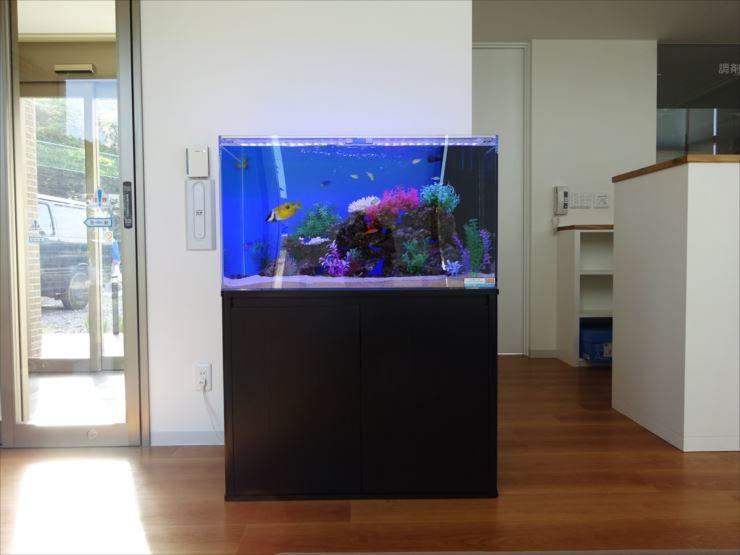愛知県岡崎市 薬局  90cm海水魚水槽 設置事例 水槽画像2