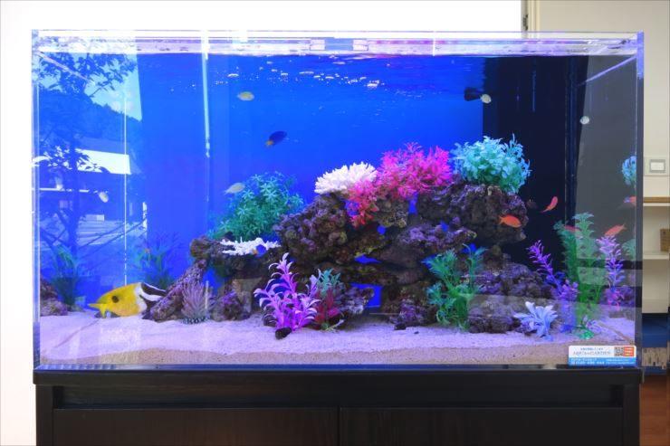 愛知県岡崎市 薬局  90cm海水魚水槽 設置事例 水槽画像3