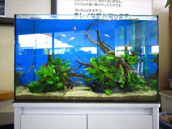 企業様  60cm淡水魚水槽  設置事例 メイン画像