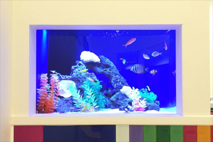 美容サロン様  60cm海水魚水槽  設置事例 メイン画像